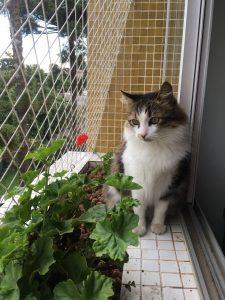 Gato, um amigo carinhoso e silencioso