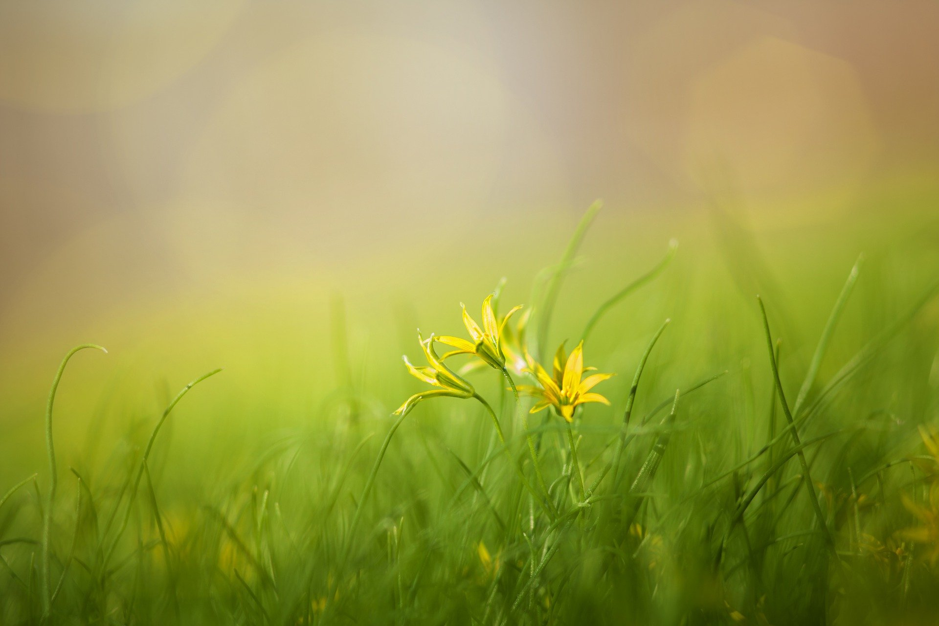 grass-3085457_1920