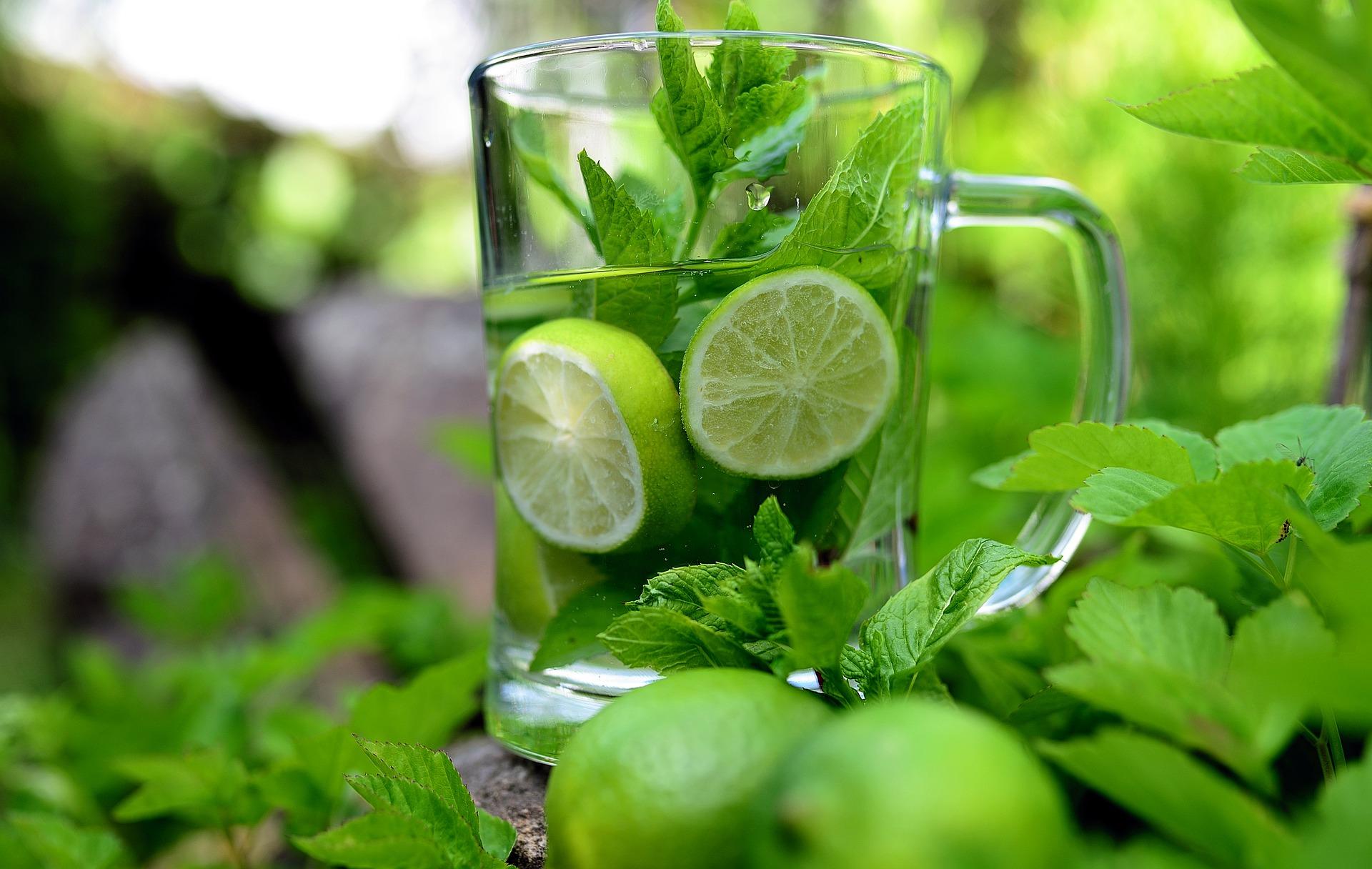 Ervas, temperos e plantas: da saúde à gastronomia